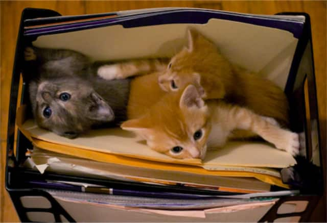They're not kitten around -- Uber will deliver a box of kittens to your office in honor of National Cat Day.
