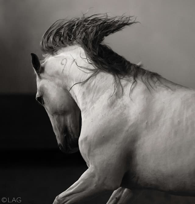 """Laurence Anne Guillem's, """"Hermes"""" (2014-15), black-and-white photograph. Courtesy the artist."""