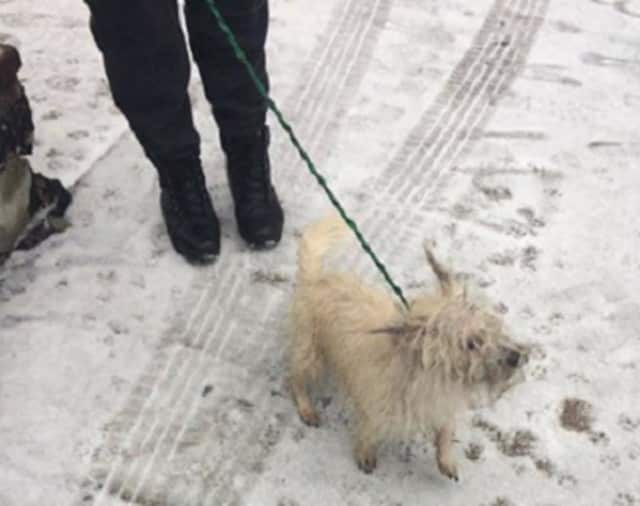 This little doggie was found at the Ludlow Train Station in Yonkers on Sunday, Feb. 12.