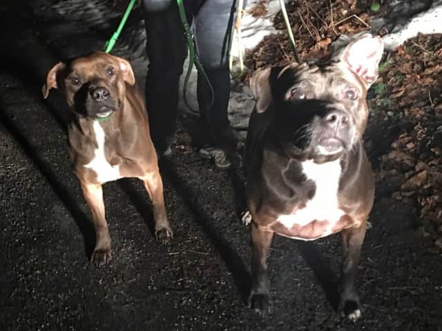 These two lost doggies, found in the Lake Carmel hamlet of Kent, have been reunited with their owners, says the local animal control officer.