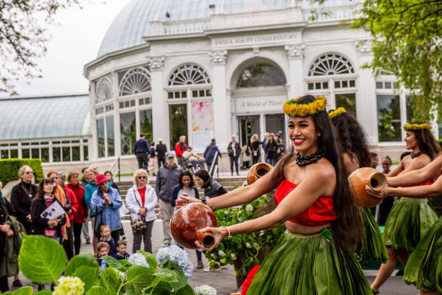 Scenes from the New York Botanical Garden's Hawaiian summer in the Bronx, including strolling patrons, hula dancers and exhibit admirers. Courtesy NYBG.