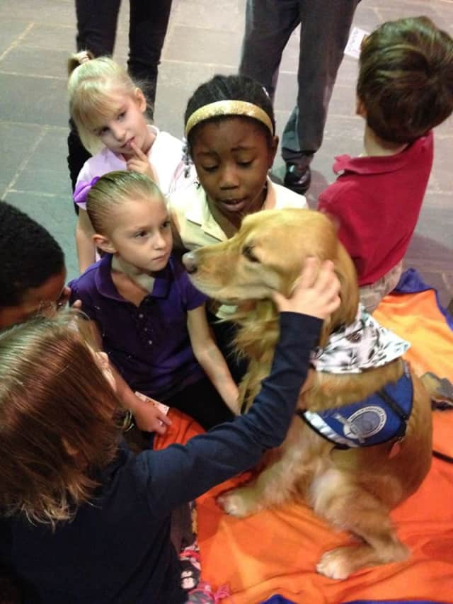 Maggie the Comfort Dog serenely accept a few caresses from students at The Chapel School in Bronxville. A Chapel School team will participate in the New York Marathon to raise money for scholarships.
