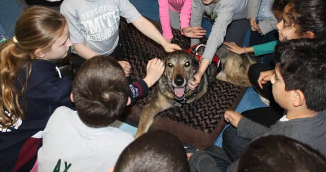 Hillsdale students learned about acceptance with the help of Sydney, a three-legged dog.