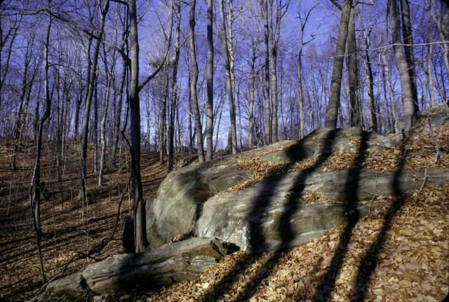 Nature Walk scheduled for Saturday at Ward Pound Ridge Reservation starts at 10 a.m.