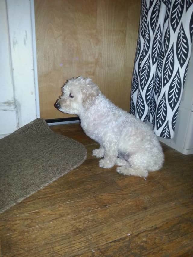 This dog was found on Route 9 in Ossining on Saturday night.