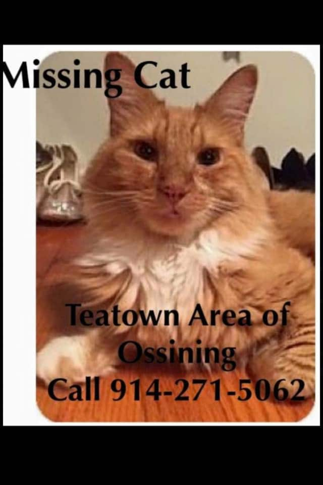 KC has gone missing from his newly-adopted Teatown Lake home.
