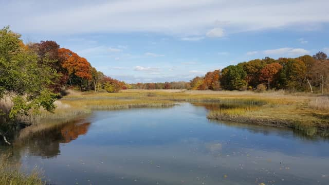 The Westchester Land Trust won a $55,000 grant to help fund a restoration project for 12 acres of coastal forest at Otter Creek Preserve in Mamaroneck.