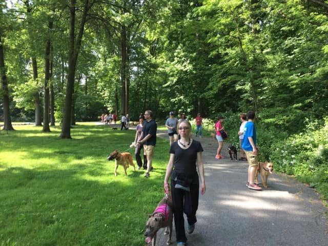 The walk will provide an opportunity for dog owners to enjoy their pets and start creating a special bond.