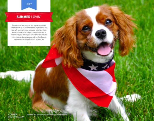 "Cooper, from Briarcliff Manor, is ""Mr. July"" in the new Pet Valu calendar."