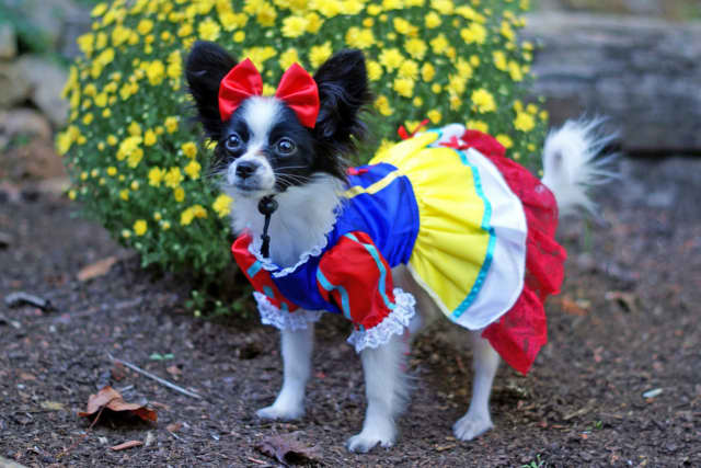 Best dressed pets will be on parade at the Oradell Animal Hospital's Community Appreciation Fair on Oct. 4.