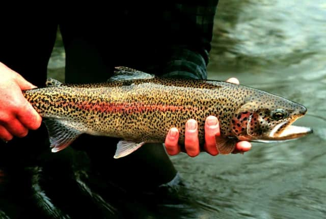 Anglers are getting ready for the kick-off of trout season on April 9.