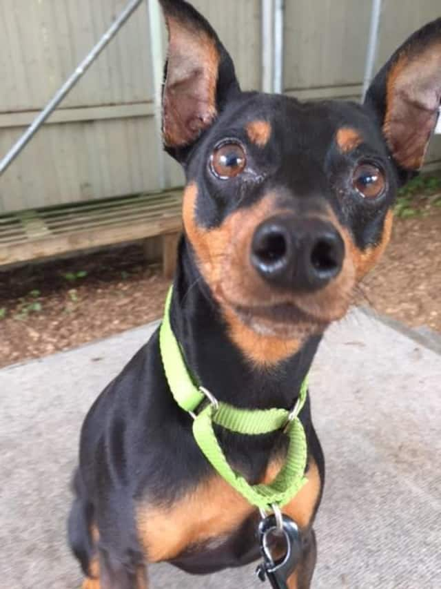 Rocky is the SPCA Pet of the Week.