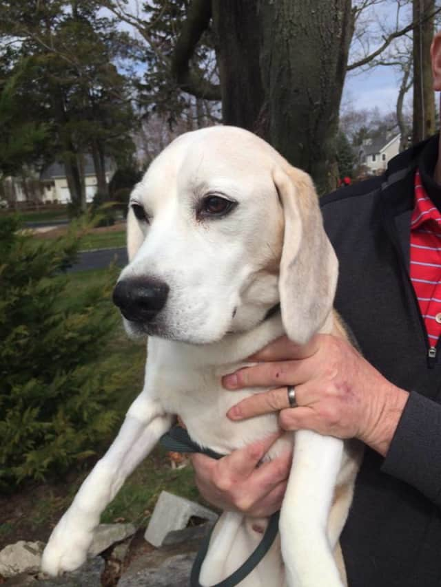 The Rye Golf Club is sheltering this lost dog, who showed up at the club on Friday morning.