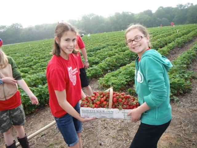 Monroe Congregational Church hosts its annual Strawberry Festival this weekend.