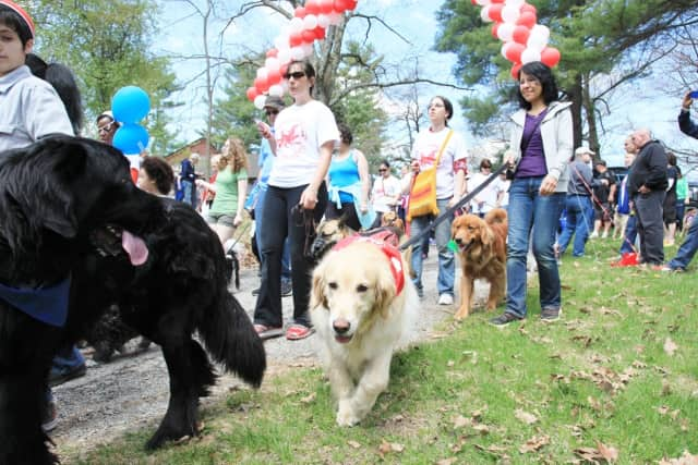 The SPCA Walkathon attracts thousands of people and pets.