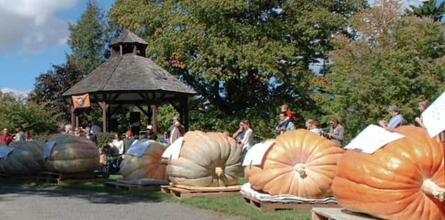 Ballard Park in Ridgefield plays host to the Giant Pumpkin Weigh-Off later this month.