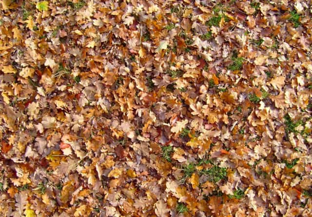 Scarsdale reminds residents of rules regarding leaf collection.