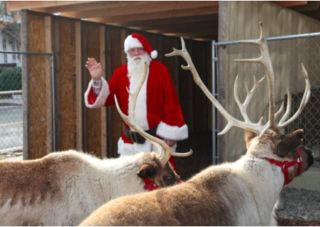 Santa and his live reindeer will be back to town for the 7th Annual Greenwich Reindeer Festival & Santa's Workshop Presented by Citizens Bank, Nov. 27 to Dec. 24.
