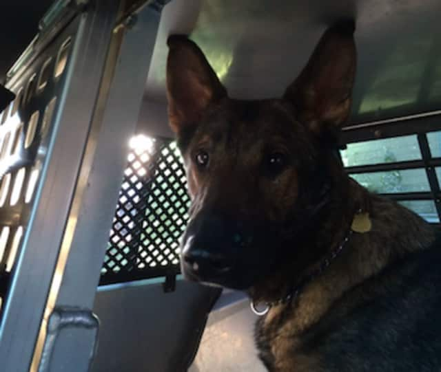 Connecticut State Police K-9 Asher will receive body armor from the charitable organization Vested Interest in K9s