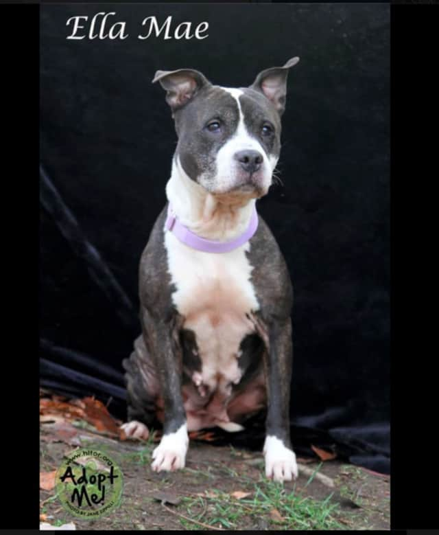 """""""Ellie Mae"""" is the Pet of the Week at Hi Tor Animal Care Center in Pomona."""