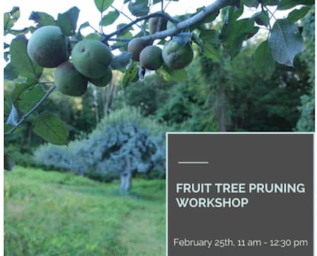 The Greenwich Land Trust is offering a tree-pruning workshop on Feb. 25.