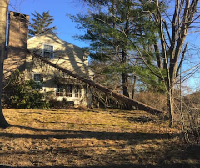 Pictured is a tree uprooted and landed on a Holbrook Drive home in Stamford, just one of many trees that were toppled or saw large branches fall to the ground knocking out power lines.