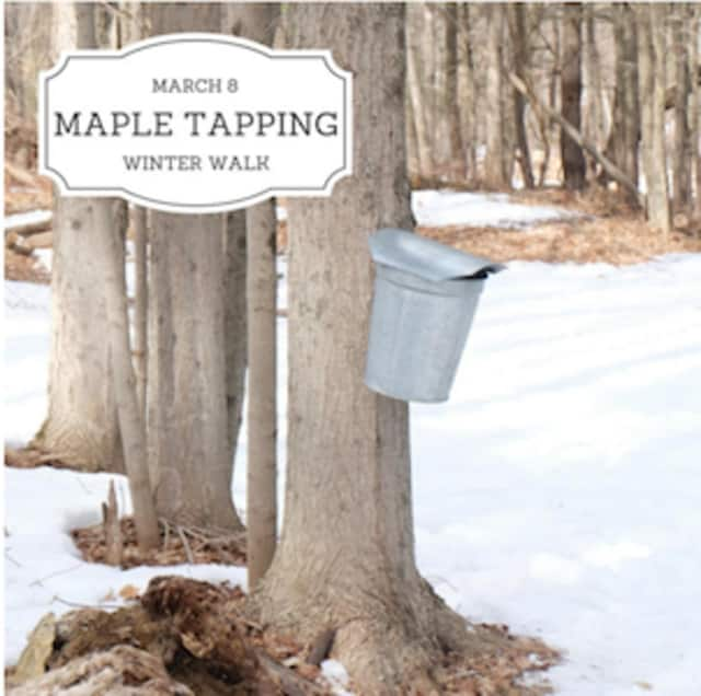 There will be a maple-tapping event March 8 with the Greenwich Land Trust.