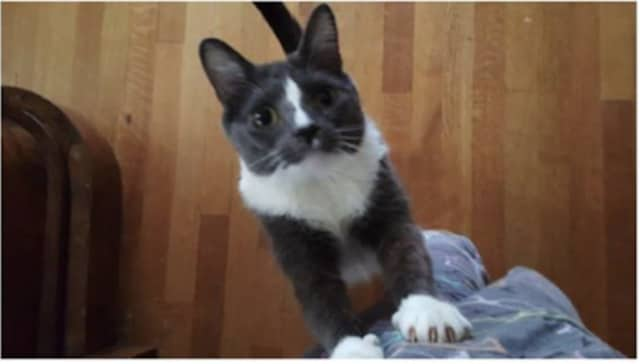 A Bronxville resident's cat has been missing since March 16.