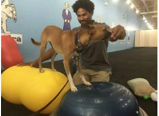 Jeris Pugh, owner of the Martial Arfs Dog Training and Fitness will offer a free program for training shelter dogs on April 13 at the Mount Vernon Armory.