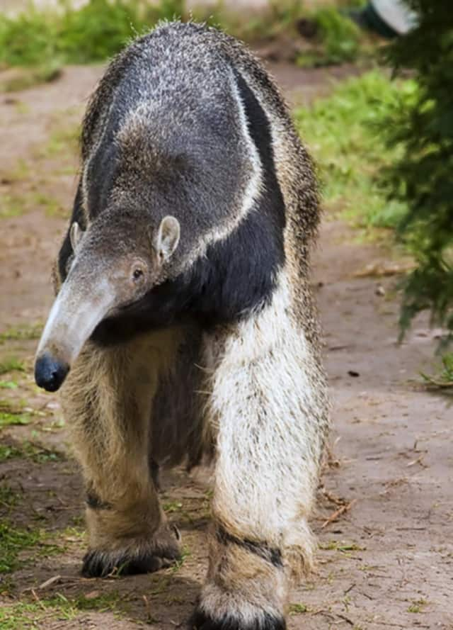 The Beardsley Zoo will present a behind the scenes look at its distinctive denizens on April 20 at Fairfield University.