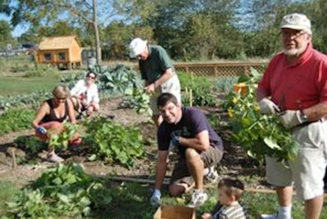 The topic of the workshop will be healthy eating from your garden.