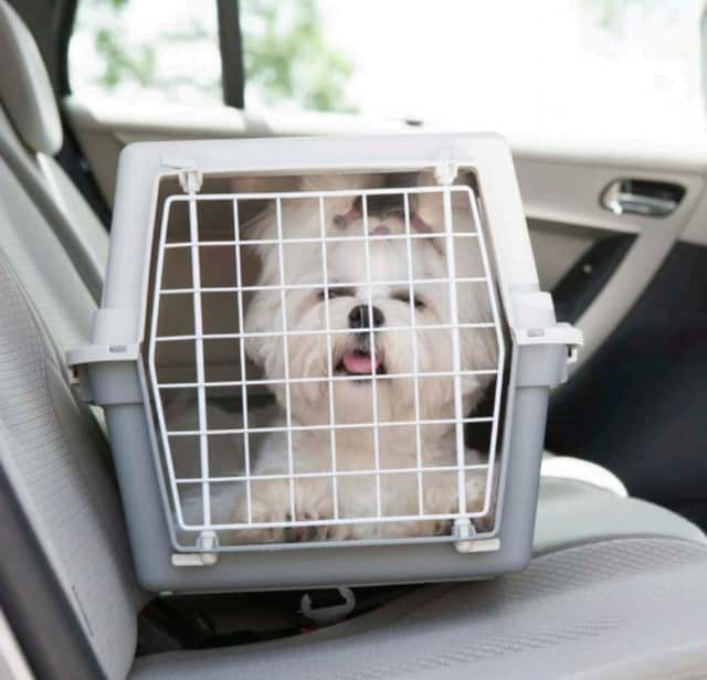 Moving with your dog? Follow these tips for both you and Fido's ease of mind.