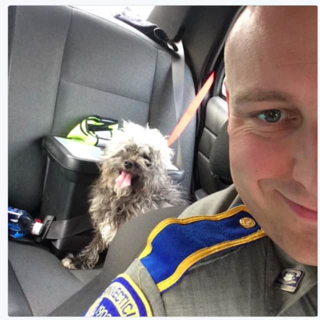 A lost poodle found on I-95 in Fairfield is looking for its owner. Anyone with information on the rescued dog is asked to call Fairfield Animal Control at 203-254-4857, the CT Post said.