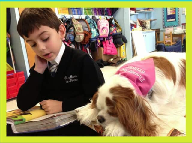 Syndey, a Cavalier King Charles Spaniel therapy dog from Hyde Park, has won the third annual Books & Barks Contest by Pets Best Insurance Services.
