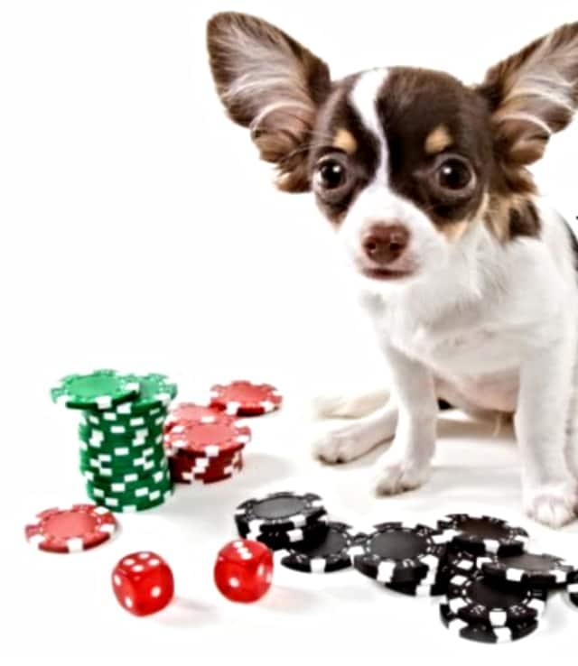 SPCA is hosting a casino night.