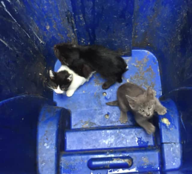 A Lyndhurst mother is seeking homes for kittens found in a Union City alley Tuesday.