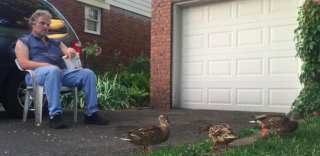 John Kaufman of Fair Lawn feeds ducks in his Blue Hill Avenue driveway.
