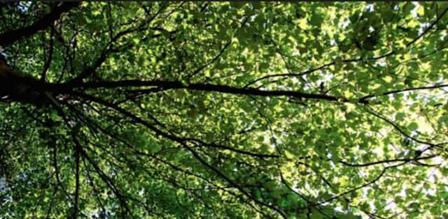The importance of tree canopies will be discussed at an upcoming meeting at the Edith Wheeler Library in Monroe.