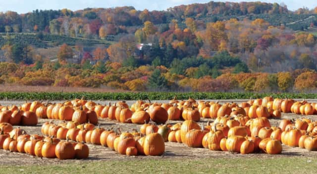Paramus' annual Pumpkin Hunt is scheduled for Oct. 29 in Petruska Park.