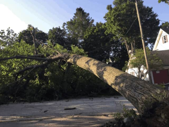 Eversource will be trimming or removing trees that pose a hazard to power lines.