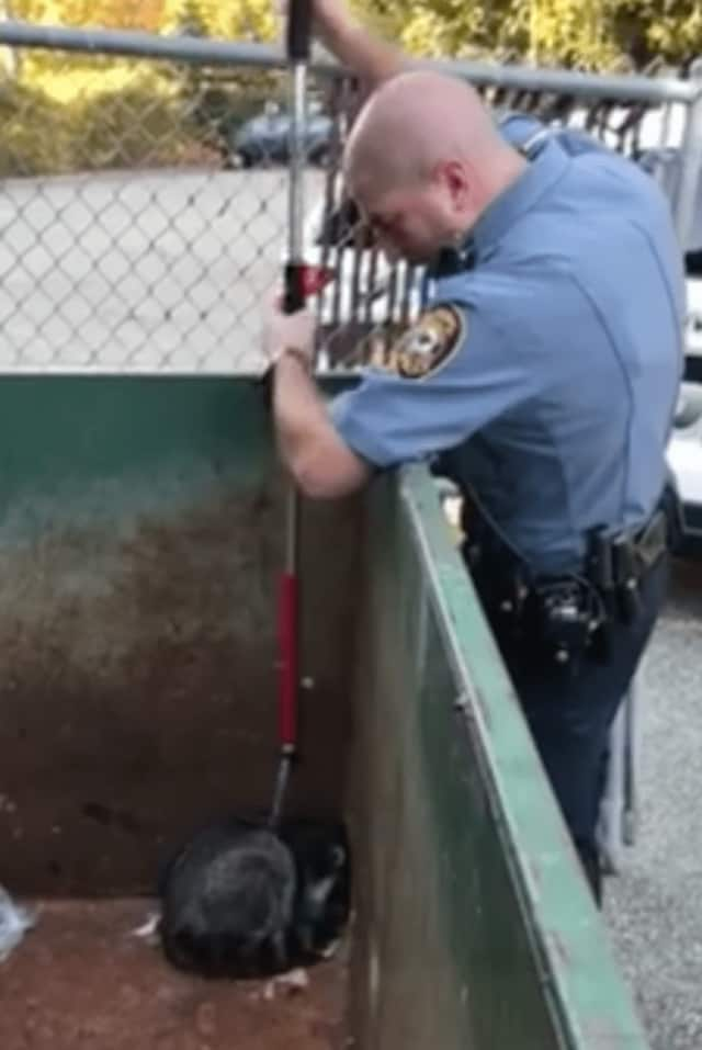 A Ramapo police officer is seen on video rescuing a raccoon from a dumpster in Airmont.
