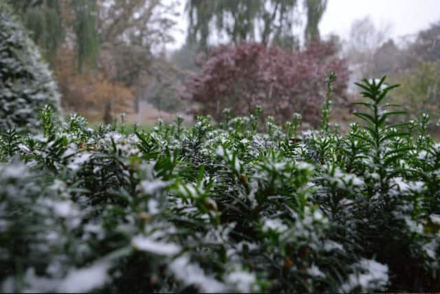 The first snow of the season fell on Oct. 27. More snow is possible this Sunday and again on Thanksgiving.