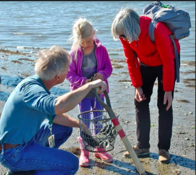 Visitors of all ages are welcome to enjoy family-oriented activities throughout the afternoon and learn how and when to safely and legally harvest clams, oysters and mussels from local waters.