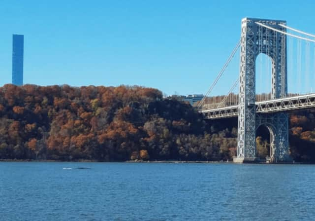 A whale was spotted in the Hudson River on Friday.
