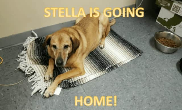 New York State Police helped Stella find her family amidst the snow storm.