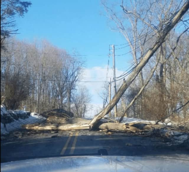 Stoney Street is closed between Winding Court and Deer Street due to this downed tree in the roadway.