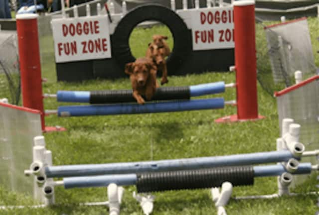The Doggie Fun Zone obstacle course was a hit at the inaugural Westport Dog Festival last year.