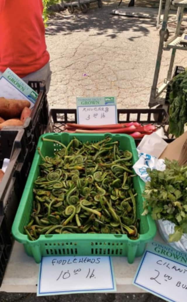 You can even find fiddleheads at the Stratford Farmers Market.