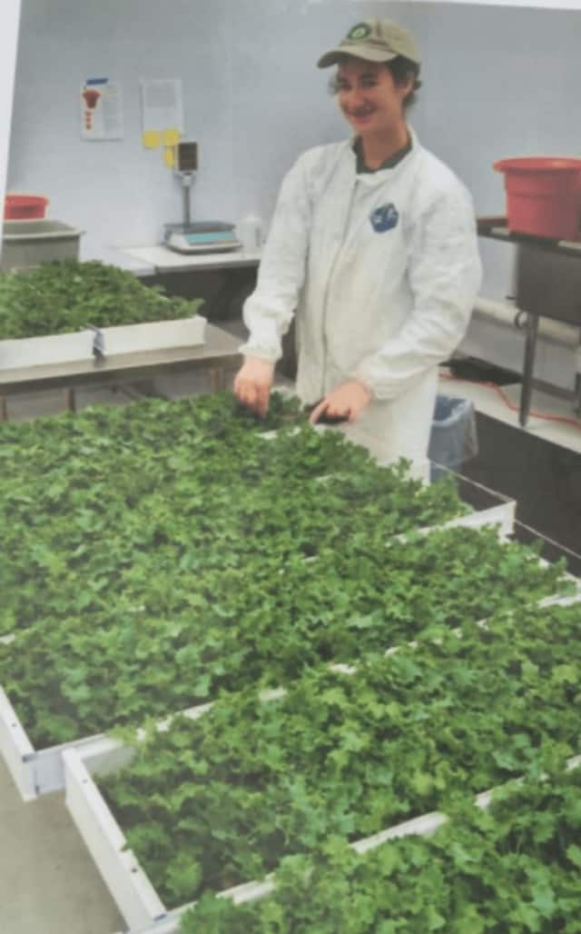 Trumbull farmers are nearly ready to open the market for summer.