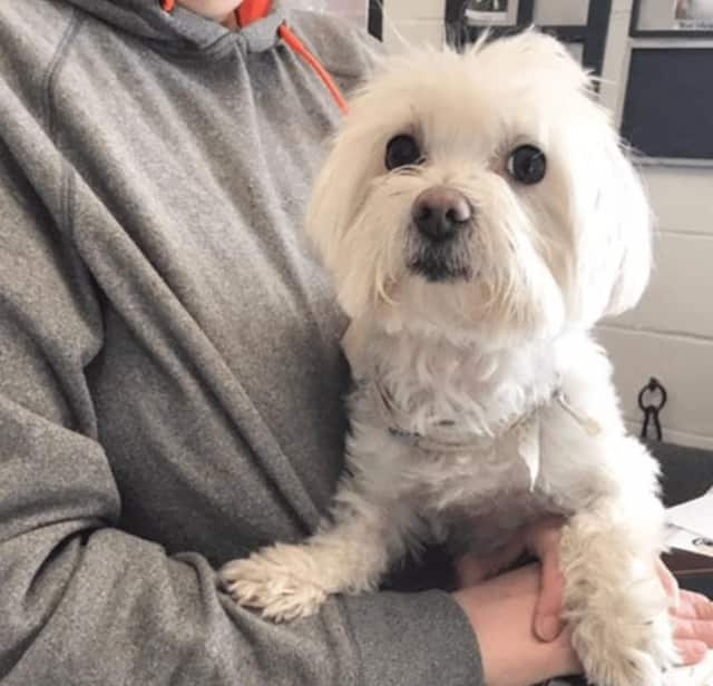 This missing dog is being held safely at the Mount Vernon Animal Shelter.